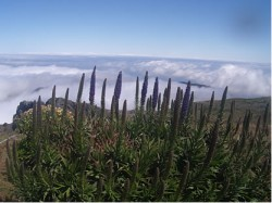 Reisebericht über Madeira