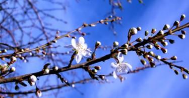 Frühlingsblüten auf Poel