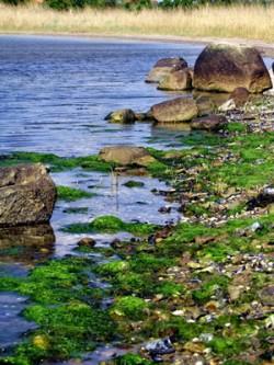 Algen, Meer und Steine