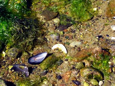 Algen und Muscheln