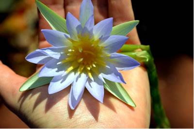 Ayurveda Blüte