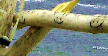 Lachen auf einem Zweig
