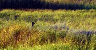 Sommergräser