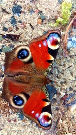 Verantwortung für das eigene Handeln  Schmetterling 1a Okt14