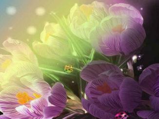 fruehling-erwachen-blumen.kaefer