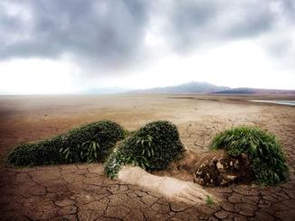 Natur Zerstörung