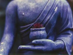 Was ist Selfness hand violett bluete buddha