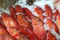 Fisch zum Verkauf auf Eis