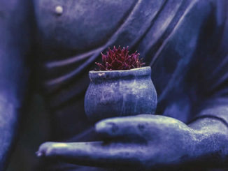 hand-violett-bluete-buddha