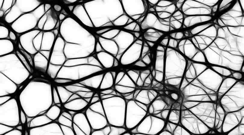 810-450-Neuronen-neurons