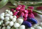 Bohnen - Hülsenfrüchte