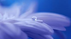 Wassertropfen auf Blüte