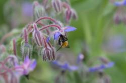 Der Garten als Spiegel der Persönlichkeit Storl Biene