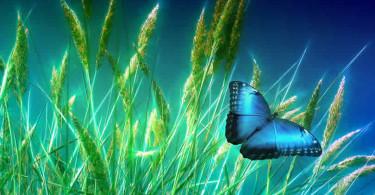 Blauer Schmetterling im Grad