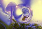 Natur - Pilz - Mystisch