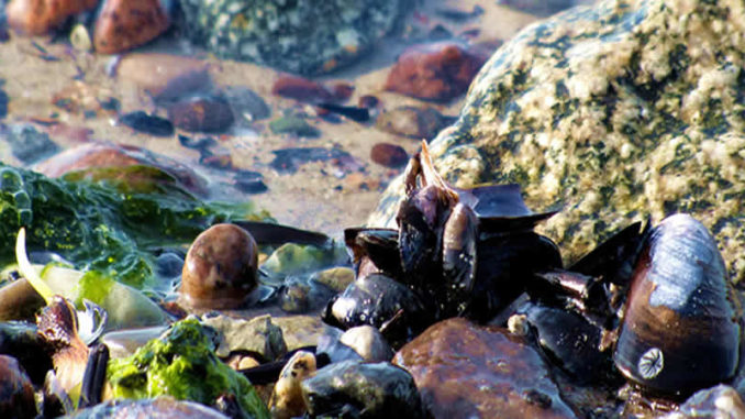 Steine-Wasser-Muscheln-Poel