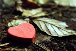 Herz-Blaetter-heart