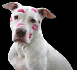 Hund-Lippenstift-love