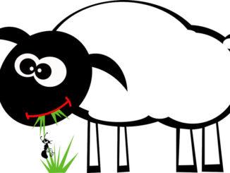 Schaf-Ameise-spirit-von-unten
