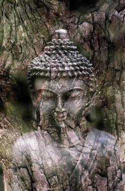 Baum-holz-buddha