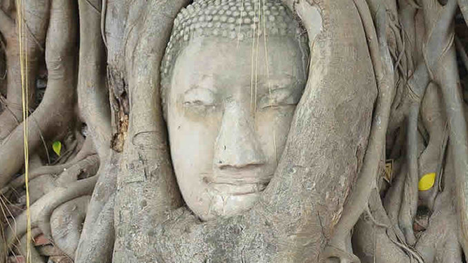 Baum-buddha-ayutthaya