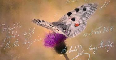 schmetterling-tagebuch-butterfly