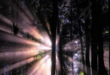 wald-licht-strahlen-forest