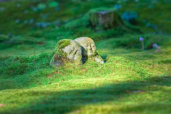 stein-figuren-wald-moos-jizo