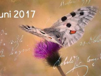 Juni-schmetterling-tagebuch-butterfly