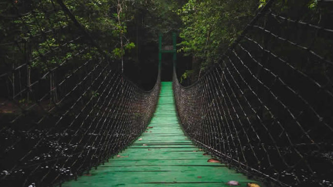 bruecke-haengebruecke-urwald-bridge