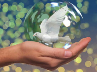 Frieden-Taube-Hand-peace-dove