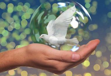 Frieden-Taube-Hand-peace-dove