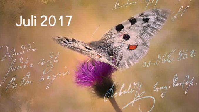 Juli-schmetterling-tagebuch-butterfly