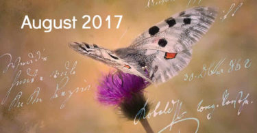 August-schmetterling-tagebuch-butterfly