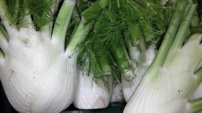 Fenchel-fennel
