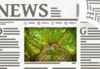 wald-zeitung-papier-newspaper