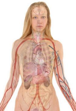anatomie-frau-anatomy