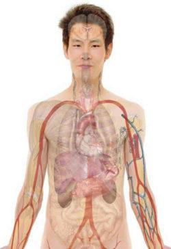 anatomie-mann-anatomy