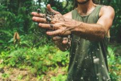 Haende-erde-pflanzen-soil