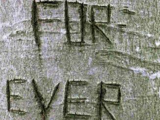 Baum-Versprechen-tree