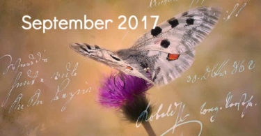 September-schmetterling-tagebuch-butterfly