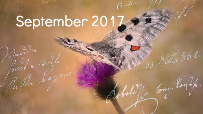 September-schmetterling-tagebuch-butterfly