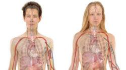 anatomie-mann-frau-anatomy