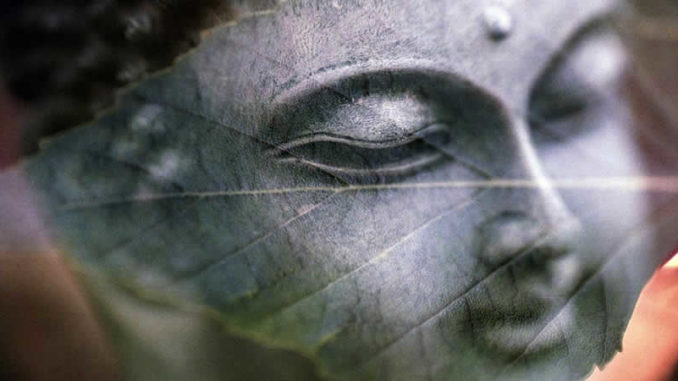 doppelt-blatt-buddha