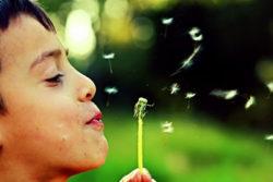 junge-pusteblume-dandelion
