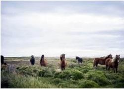 Island-2018-Barbara-Bessen-Reisen