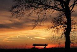baum-golden-licht-weg-tree