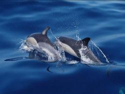Seminar-dolphin-healing-Guenter-Hauer