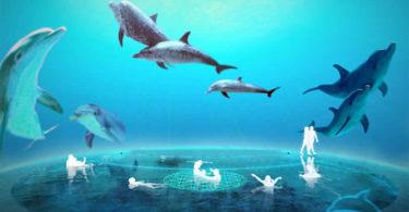 delphin-dom-dolphin-healing