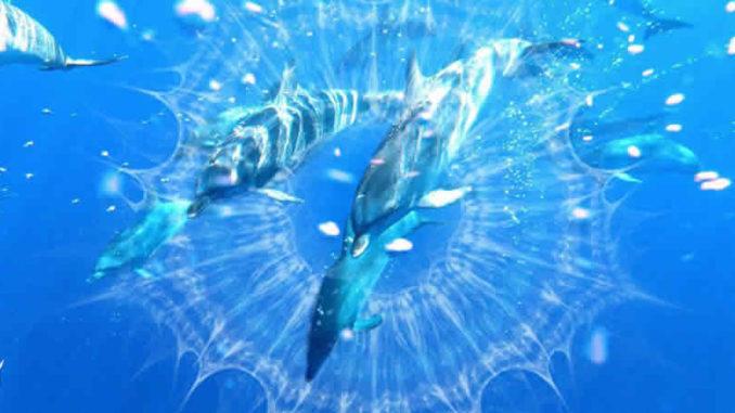 dolphin-healing-Guenter-Hauer